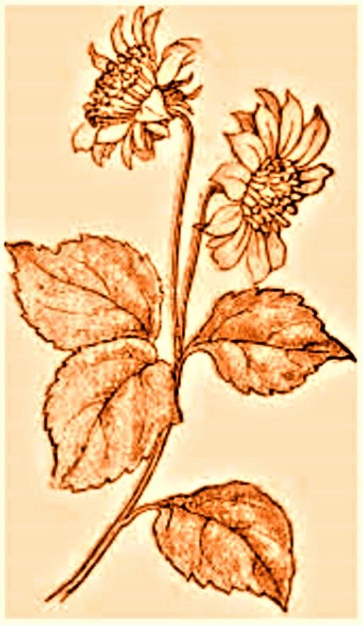 flowers eee